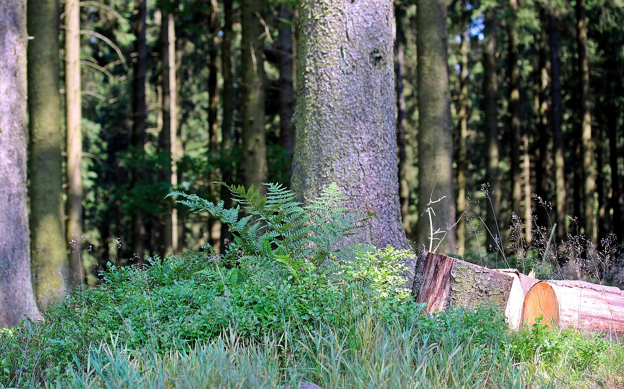 forest-1533235_1280_1